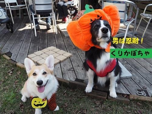 4くりかぼちゃ