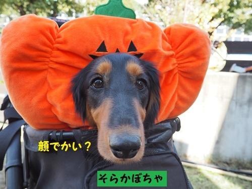 5そらかぼちゃ