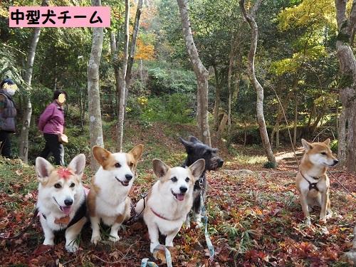 3中型犬組