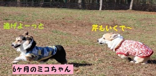 6ミコちゃん「