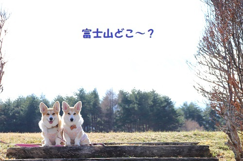 13富士山どこ