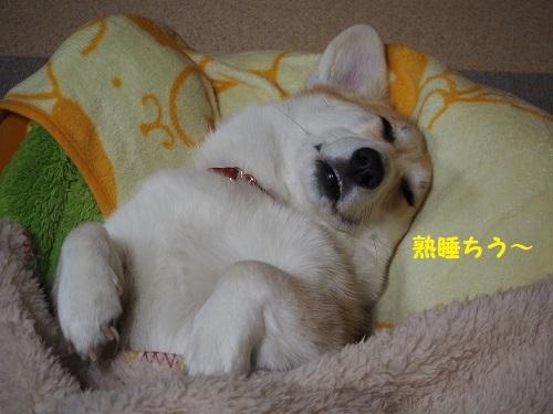 82熟睡ちう