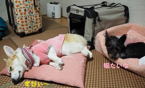 34芹ちゃん爆睡