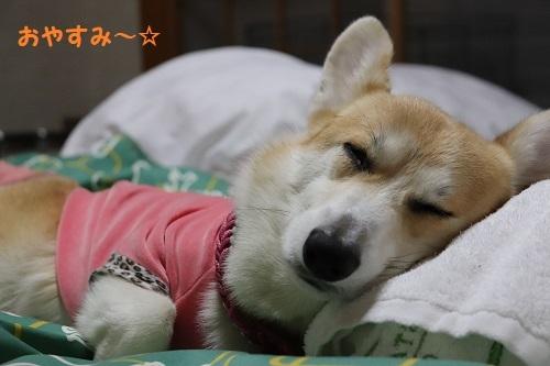 52おやすみー