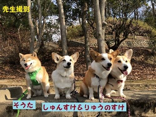 3中型犬で2