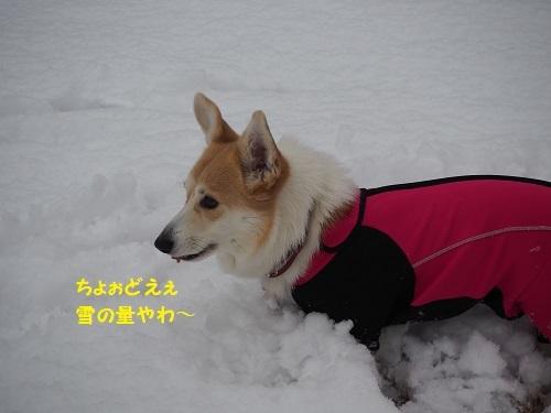 10ちょぉどえぇ積雪