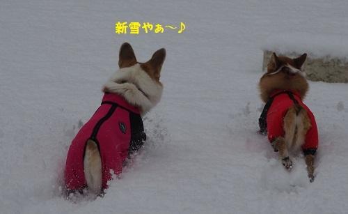 11新雪や