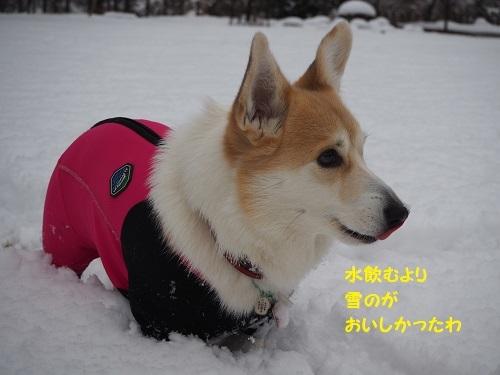 22雪おいし