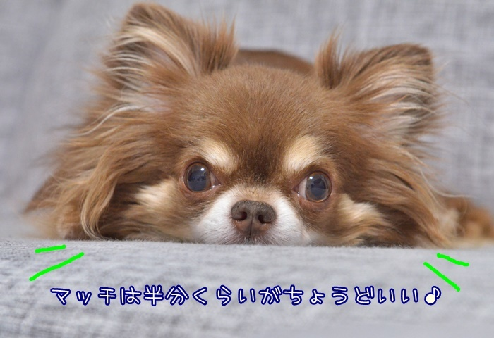 DSC_8298_2018071920385298e.jpg