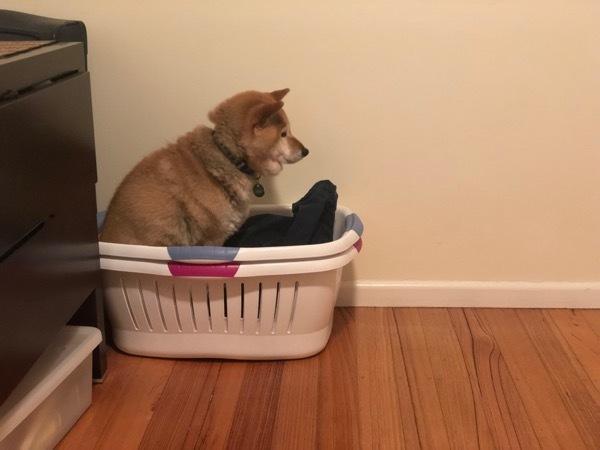 洗濯物ふろ1