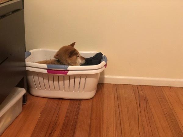 洗濯物ふろ2
