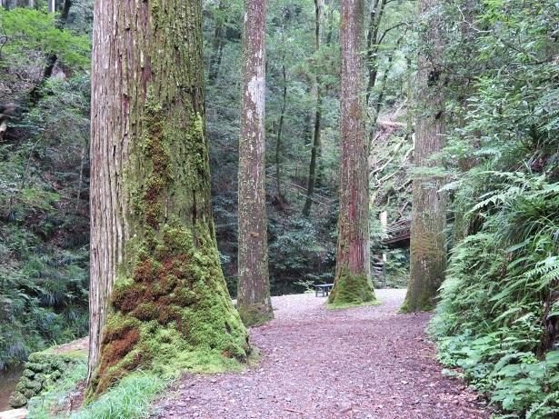 阿寺の七滝への道