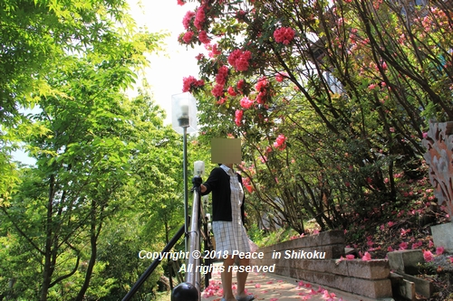 arabamoer-050140776.jpg