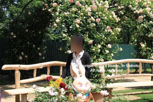 arabamoer-050140867.jpg