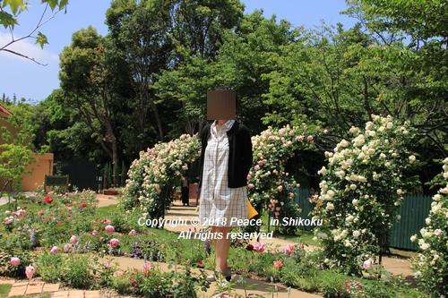 arabamoer-050140874.jpg