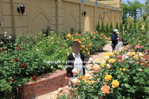 arabamoer-050140899.jpg