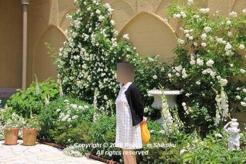 arabamoer-050140908.jpg