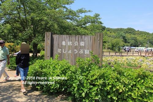 syoubu-06041247.jpg