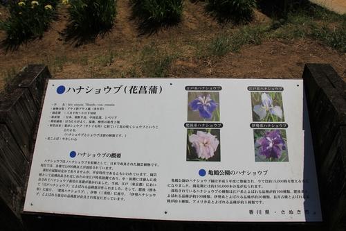 syoubu-06041257.jpg