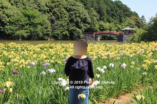 syoubu-06041258u.jpg
