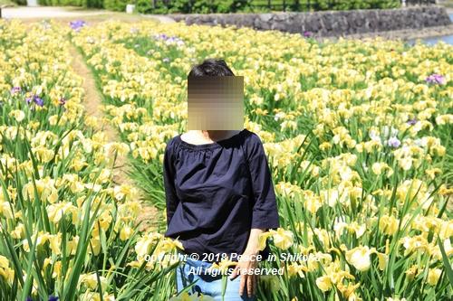 syoubu-06041265u.jpg