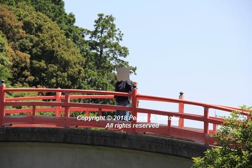 syoubu-06041271u.jpg