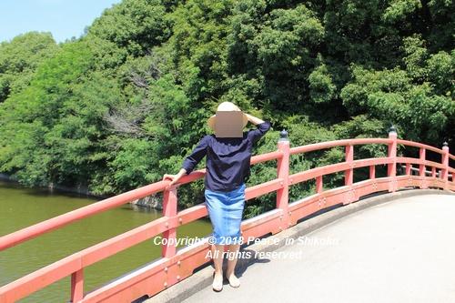 syoubu-06041292.jpg