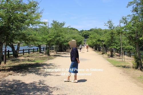 syoubu-06041306.jpg