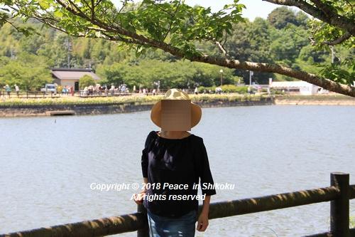syoubu-06041325.jpg