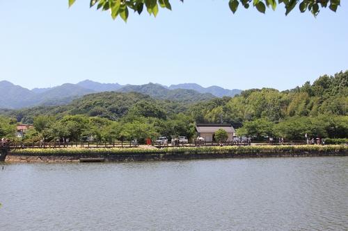 syoubu-06041331.jpg