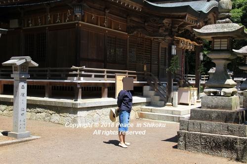syoubu-06041358.jpg