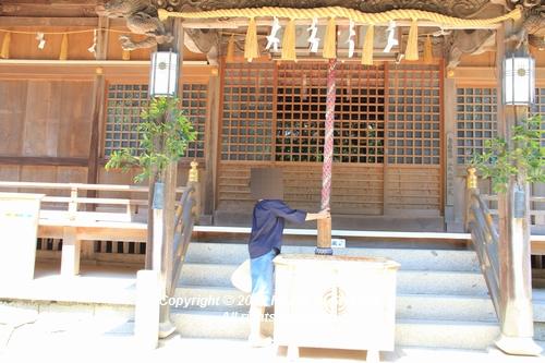 syoubu-06041361.jpg