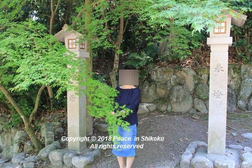 syoubu-06041383.jpg