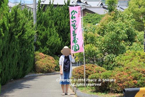 syoubu-06041419.jpg