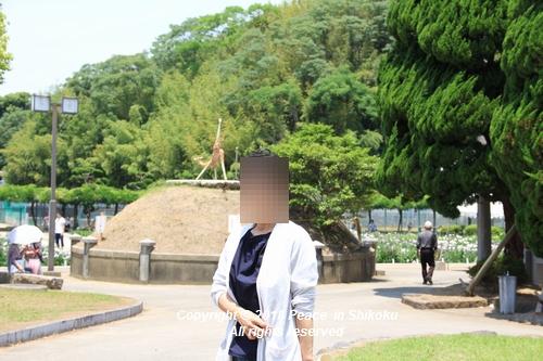 syoubu-06041429.jpg