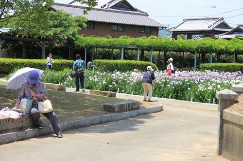 syoubu-06041431.jpg
