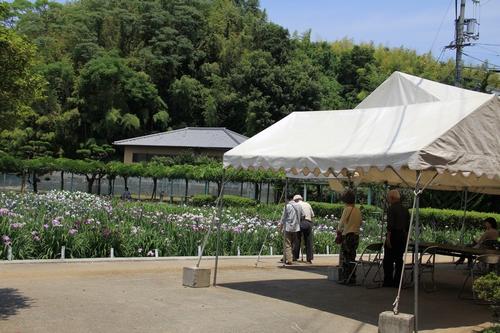 syoubu-06041432.jpg