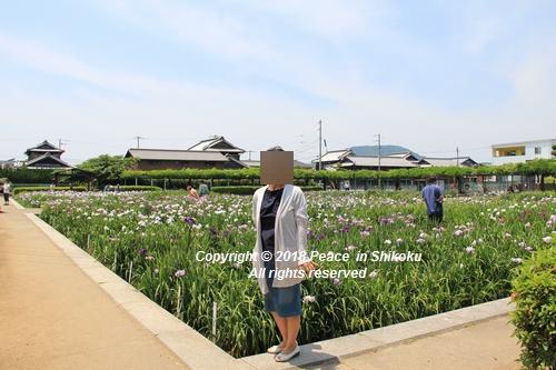 syoubu-06041445.jpg