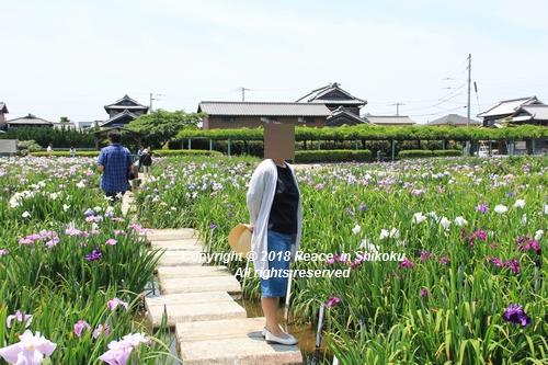 syoubu-06041449.jpg
