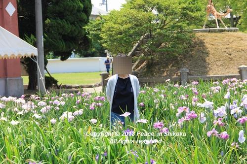 syoubu-06041455.jpg