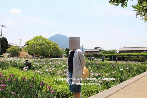 syoubu-06041459.jpg