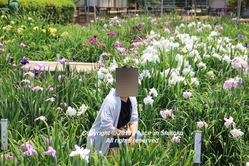 syoubu-06041465.jpg