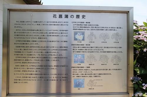 syoubu-06041485.jpg