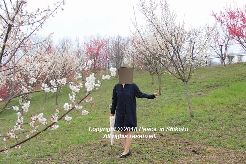 uonnamharu-03198302.jpg