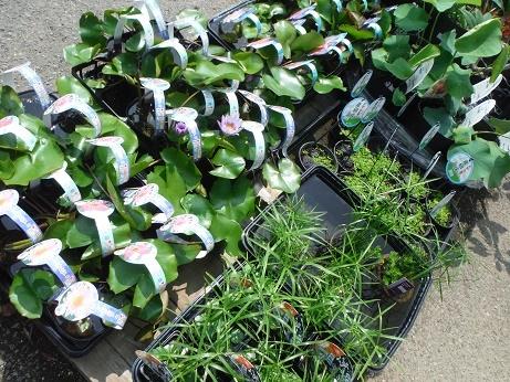 20180609 4 水生植物