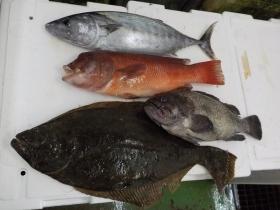 10鮮魚セット201867