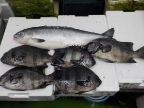 16鮮魚セット201867