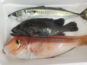 13鮮魚セット201868