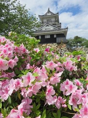 IMG_9764 浜松城