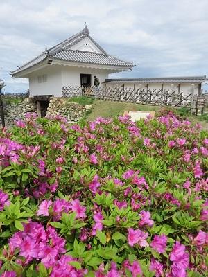 IMG_9765 浜松城